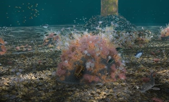 Nieuwe onderwaternatuur bij windparken op zee