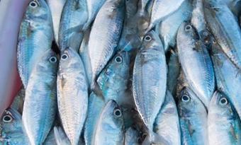 Dode vissen als grondstof voor biogas bij cruisemaatschappij
