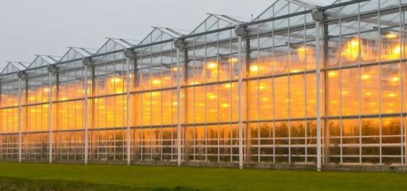 Westlandse telers willen met collectief warmtesysteem glastuinbouw verduurzamen