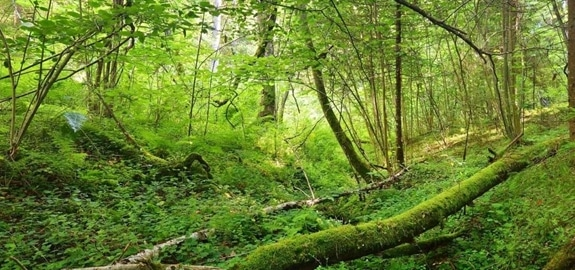 Hoeveel biomassa groeit er in Europese bossen?