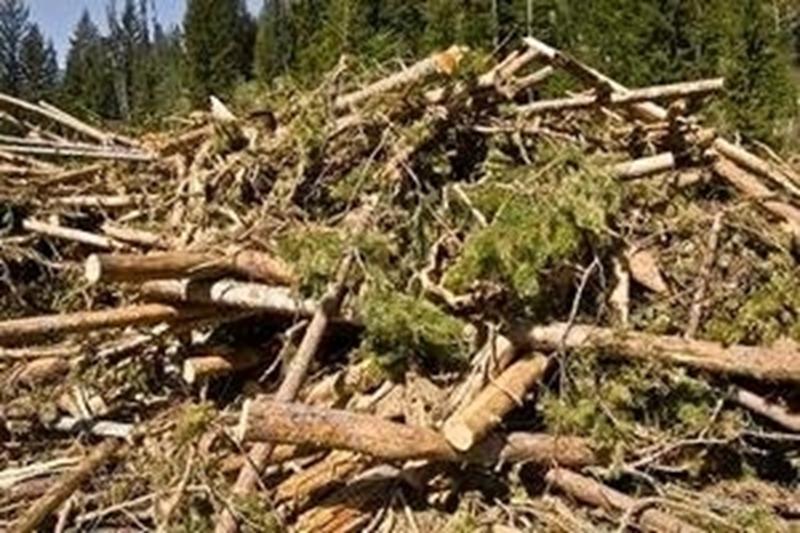 Bioraffinage heeft een kleine impact op houtproducten, grondstoffenmarkten