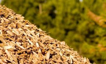 Opening BioWarmte Installatie in Utrecht, Nederland: duurzamere stadswarmte met biomassa