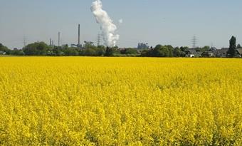 Bio-energie heeft een onbenut potentieel voor de energietransitie van de EU