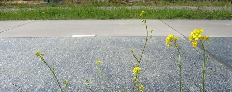 Provincies in Nederland testen weg met zonnepanelen erin