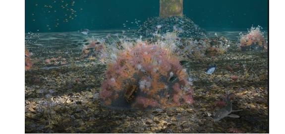 8,5 miljoen voor onderwaternatuur in Nederlandse windparken op Noordzee