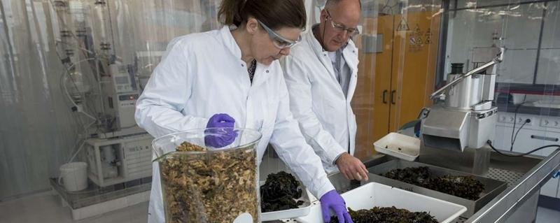 De rol van zeewier in de energietransitie
