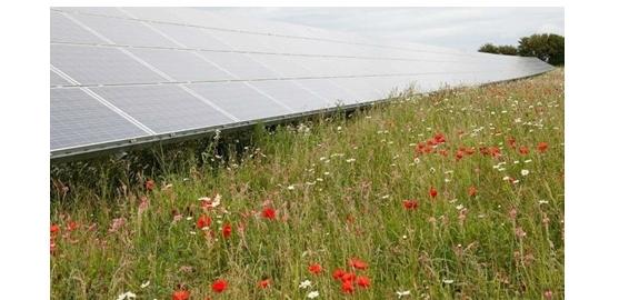 Zonneparken genereren een groot aantal voordelen voor lokale ecosystemen.