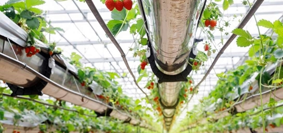 Kas op warmtepomp en ledlicht in Wageningen in Nederland