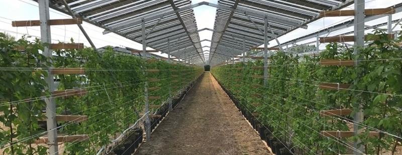 GroenLeven start grootschalige proef met zonnepanelen boven aardbeien, bramen en rode en blauwe bessen