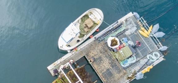 Norther krijgt als eerste offshore windpark ter wereld een zeewierboerderij