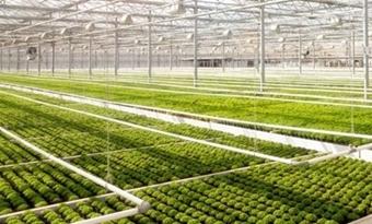 Onderzoek: zonnepanelen op serre hebben geen gevolgen voor kwaliteit groente