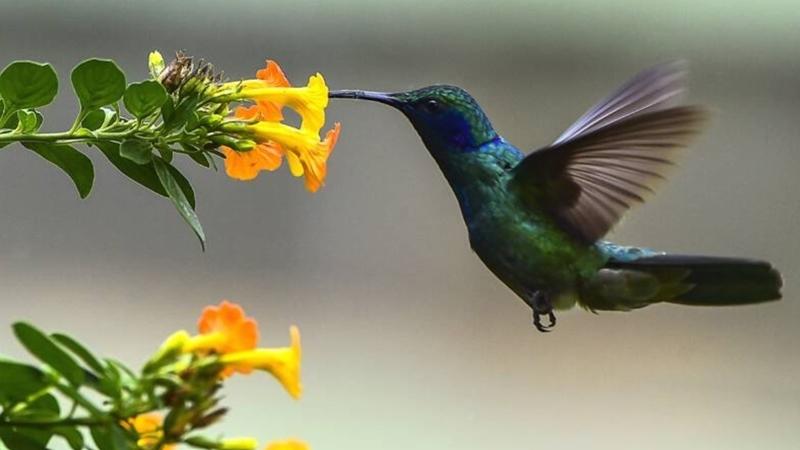 Windmolens en ventilatoren mogelijk stiller door onderzoek naar kolibries