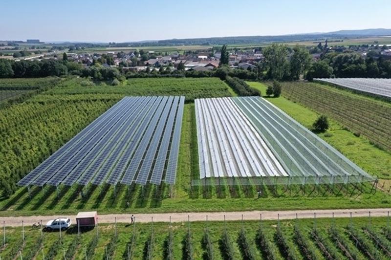 Agrivoltaïsche systemen beschermen gewassen tegen hevige regenval