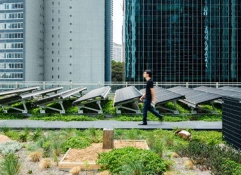 Nieuw bewijs: zonnepanelen op groene daken leveren meer stroom